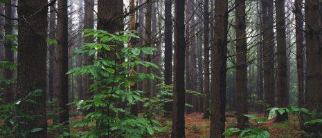 Why is Linked Data Like an Aspen Grove?